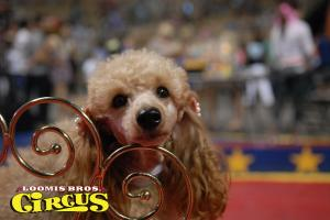 loomis-bros-circus-21