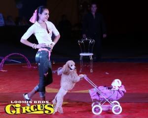 loomis-bros-circus-33