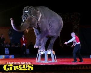 loomis-bros-circus-42