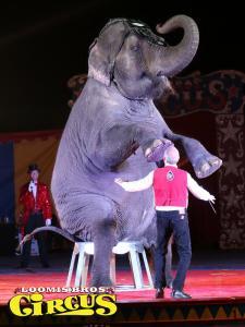 loomis-bros-circus-54